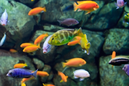 image of a tropical Fish on a coral reef underwater Stock Photo - 17204605