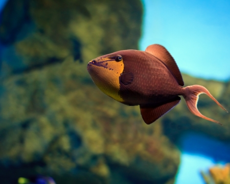 tropical Fish on a coral reef Stock Photo - 17254558
