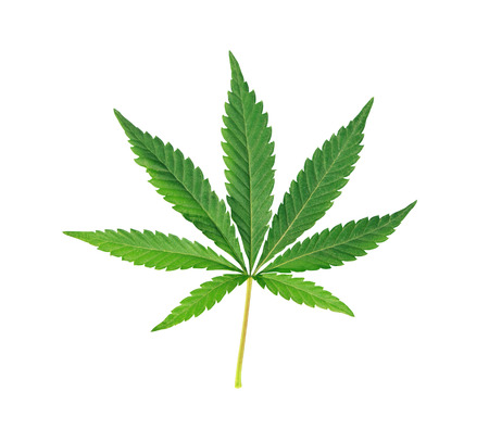 Cannabis leaf marijuana isolated over white background Banco de Imagens