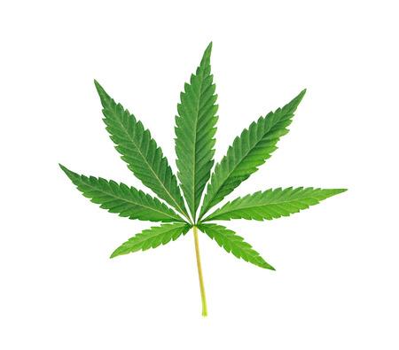 Cannabis blad, marihuana geïsoleerd over witte achtergrond
