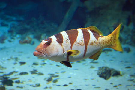 reef fish: tropical Fish on a coral reef