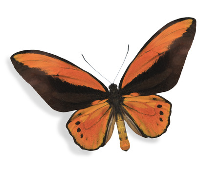 Orange butterfly isolated on white Stock Photo