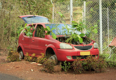 GOA, India - March 01, 2015: An abandoned red car with germinated plants under the hood
