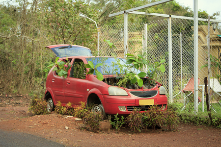 GOA, India, An abandoned red car with germinated plants under the hood