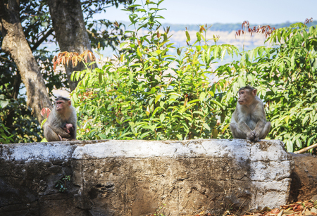 Monkey family in the tropical forest