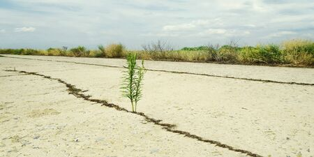 small green sprout on a concrete road