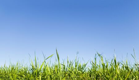 Green grass over deep blue sky Imagens
