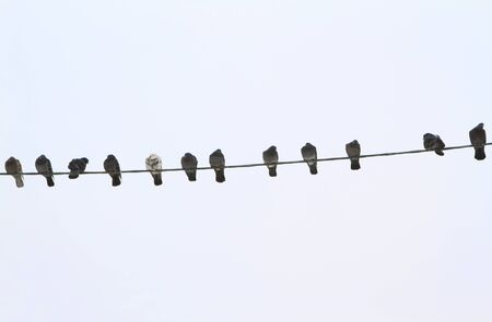 Birds on a electrical wire over blue sky