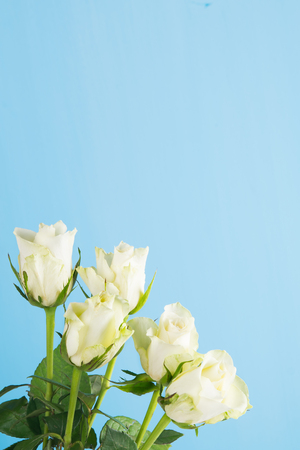 In a corner of a blue background, a bouquet of white roses