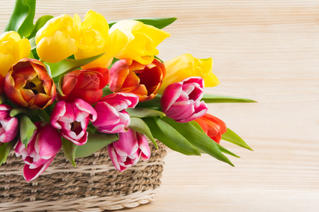 Wicker basket with multi-colored tulips, on a white wooden background