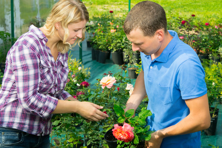 Man and woman take care of a rose in a flowerpot