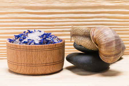snail sits on a rock and looks at salt for spa treatments Stock Photo