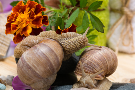 two snails together on a background of flowers, playing on stones