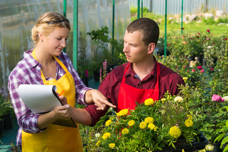 A man and a woman make notes in a greenhouse for breeding plants for sale