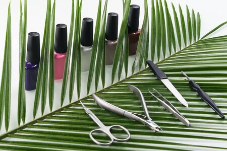 set for manicure and pedicure and multi-colored nail polishes on the background of the green twig of the plant Stockfoto