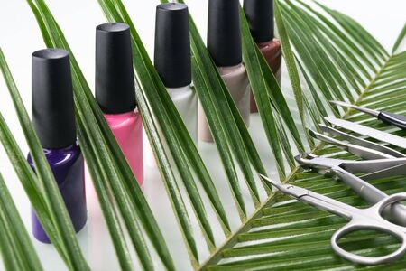 Multicolored nail polishes with manicure and pedicure tools on a green plant Фото со стока