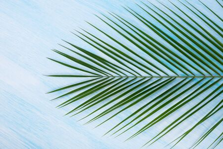 green palm branch on a blue background, close-up