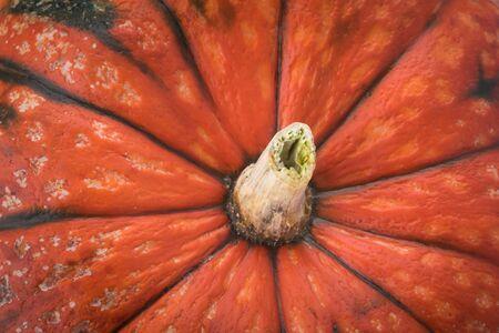 background from top of orange ripe pumpkin
