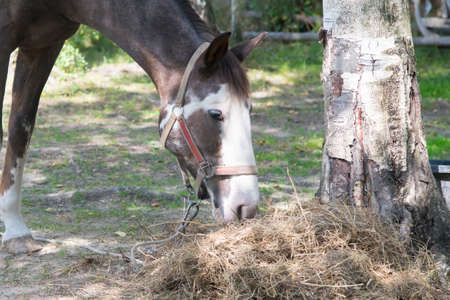 the horse eat the dry grass, in the fresh air