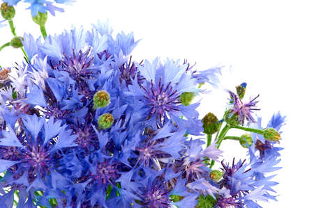 bunch of cornflowers. Over white background Stock Photo - 2511914