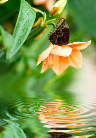 Butterfly on the flower above the pure water