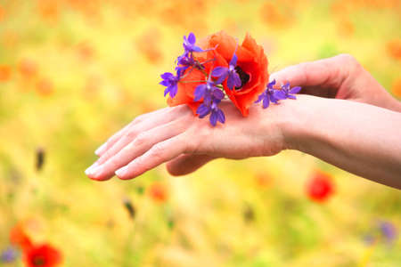 woman hands with poppy flowers  photo