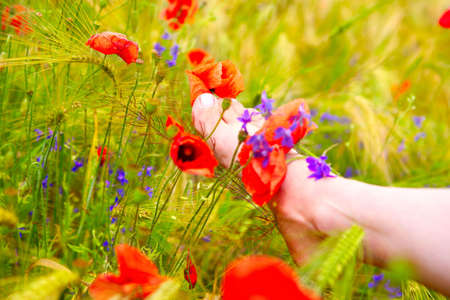 Woman foot among the green plants and poppy  photo
