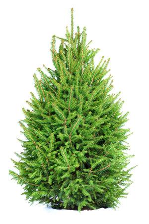 Christmas Tree . Isolated over white background  photo