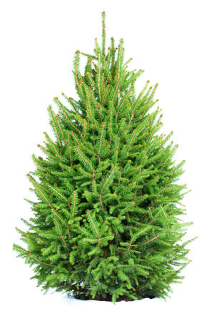 Christmas Tree . Isolated over white background  photo
