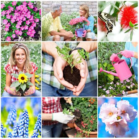 Gardening. Stock Photo - 8950545