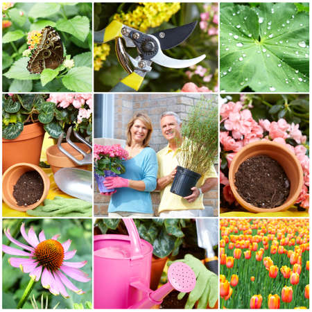 woman gardening: seniors gardening Stock Photo
