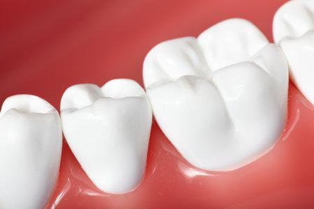 Teeth Stock Photo - 9614794