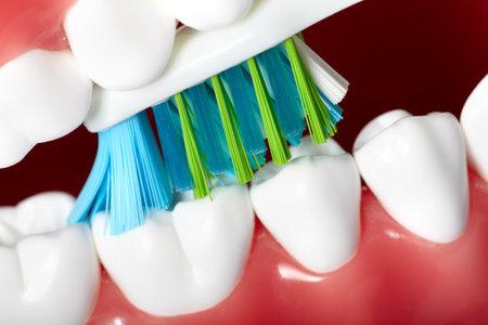 brush teeth: Teeth Stock Photo