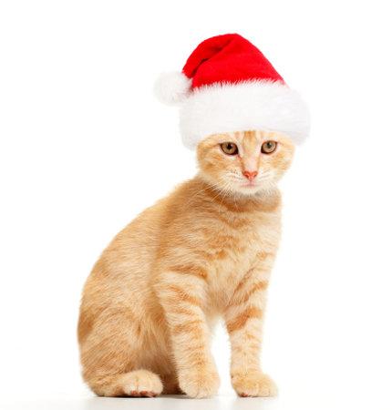 Santa cat. Stock Photo - 10757174