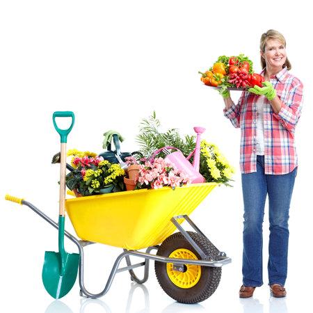 wheelbarrow: Gardening. Stock Photo