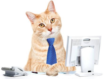 Kat in het kantoor