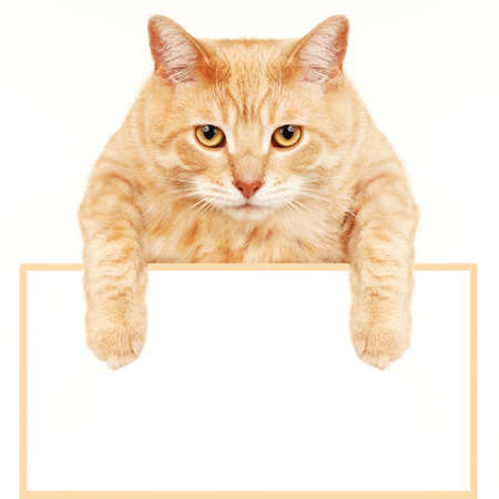 Kat met banner Stockfoto