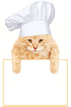 ginger cat: Cat chef with banner
