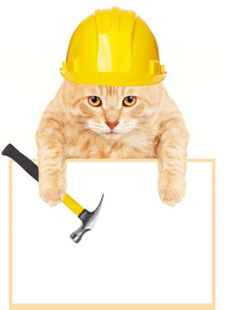 Cat with hammer and banner  Stock Photo - 17315877