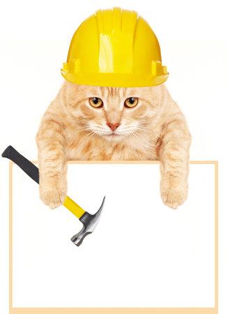 empleadas domesticas: Gato con el martillo y la bandera