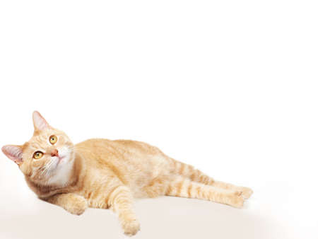 Pet cat  Stock Photo - 17315871