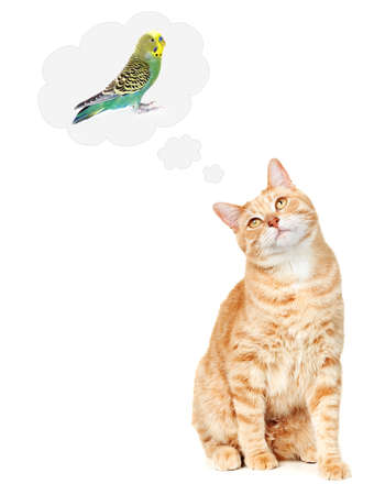 Cat thinking about bird  photo