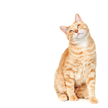 고양이 초상화 스톡 콘텐츠 - 17873199