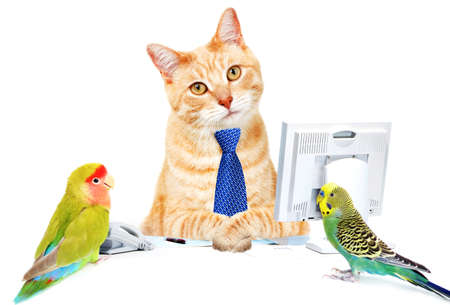 budgie: Cat and birds