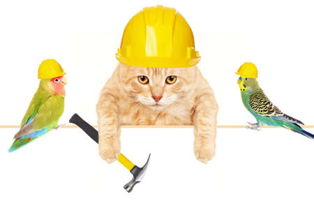 Cat with hammer and birds  photo