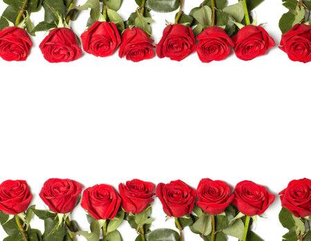 Rose rouge Banque d'images - 17991200