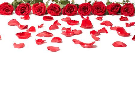 Red rose Banco de Imagens - 17991192