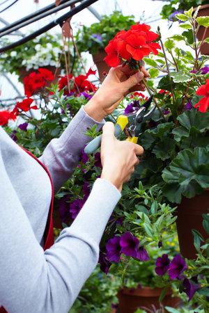 flower nursery: People working in nursery