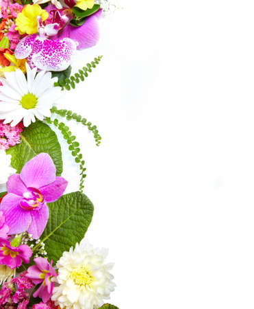 Floral greeting card with beautiful flowers Stock Photo - 18589837
