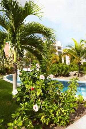 Beautiful tropical garden Stock Photo - 20067405
